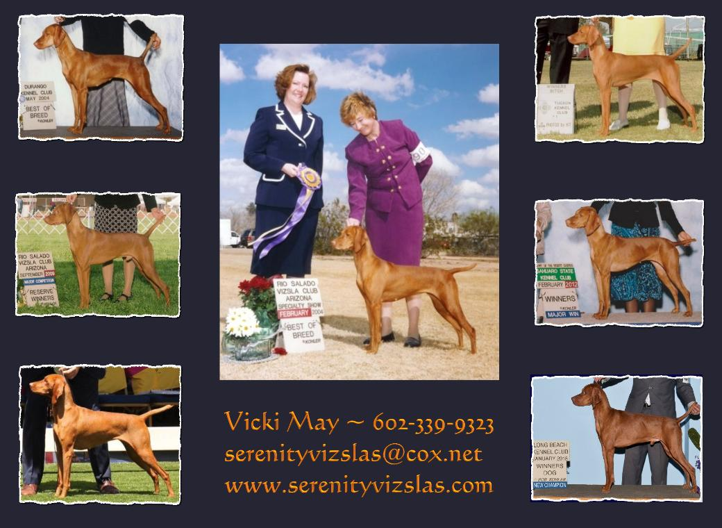 click here for Our Vizslas